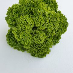 Green Frilly Lettuce